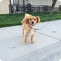 Adopt A Pet :: Camilo - Meridian, ID