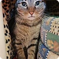 Adopt A Pet :: Johnny (Cocoa Center) - Cocoa, FL