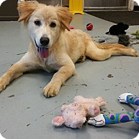 Adopt A Pet :: Heart - New Canaan, CT