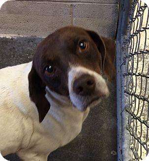 Hound (Unknown Type) Mix Dog for adoption in Greensburg, Pennsylvania - Princess