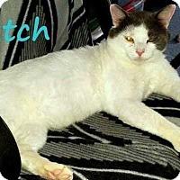 Adopt A Pet :: Butch - Belton, SC