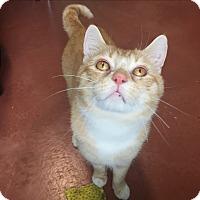 Adopt A Pet :: Alphie - Tioga, PA