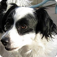 Adopt A Pet :: Cyrus - Oakley, CA