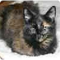 Adopt A Pet :: Patch - Lake Ronkonkoma, NY