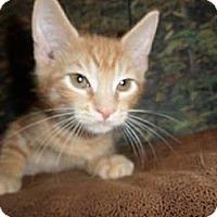 Adopt A Pet :: Harvey - Norwich, NY