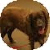 Adopt A Pet :: Snickers - Denver, CO