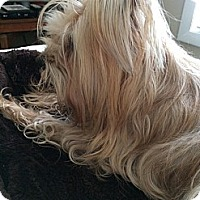 Adopt A Pet :: Bailey - Leeds, AL