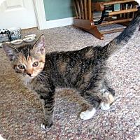 Adopt A Pet :: Elsa (Read My Story!) - Arlington, VA