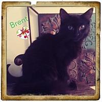 Adopt A Pet :: Brent - Harrisburg, NC