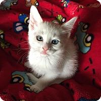 Adopt A Pet :: Windy - Scottsdale, AZ