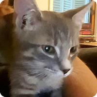 Adopt A Pet :: Willy - Pensacola, FL