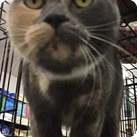 Adopt A Pet :: Greta - Bear, DE