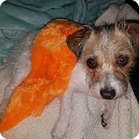 Adopt A Pet :: Kathy in San Antonio - San Antonio, TX