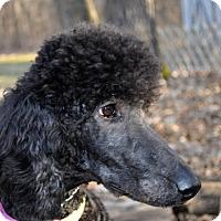 Adopt A Pet :: AGNES - Elk River, MN