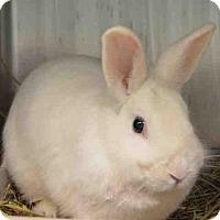 Adopt A Pet :: GIBBS - Brooklyn, NY