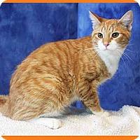 Adopt A Pet :: Butterscotch - South Bend, IN