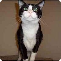Adopt A Pet :: Jessica - Hesperia, CA