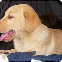 Adopt A Pet :: Arriana - Chandler, IN