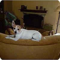 Adopt A Pet :: PEACHES - Scottsdale, AZ