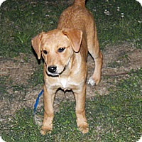 Adopt A Pet :: Carol in Pembroke, MA - - Braintree, MA
