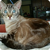 Adopt A Pet :: spitfire - brewerton, NY