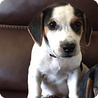 Adopt A Pet :: Bandit - Wilmington, DE
