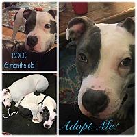 Adopt A Pet :: Cole - joliet, IL