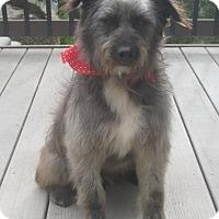 Adopt A Pet :: BENGI - La Mesa, CA