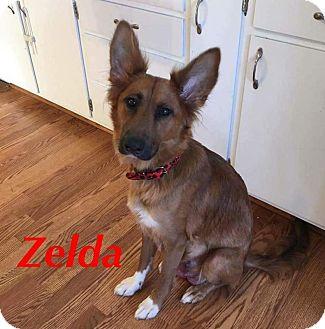 Shepherd (Unknown Type) Dog for adoption in Tomah, Wisconsin - Zelda