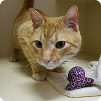 Adopt A Pet :: Garfield - Elyria, OH