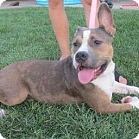 Adopt A Pet :: Scruffy - Sacramento, CA