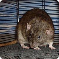 Adopt A Pet :: Samuel - Greenwood, MI