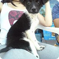 Adopt A Pet :: Leo - Miami, FL