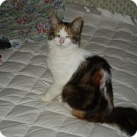 Adopt A Pet :: Fluffy - Leamington, ON