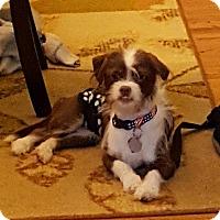 Adopt A Pet :: Toby - Marietta, GA