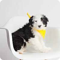 Adopt A Pet :: Renly - Ogden, UT