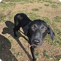 Adopt A Pet :: Solace - Alexandria, VA