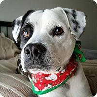 Adopt A Pet :: Dallas - Kingwood, TX