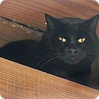 Adopt A Pet :: Rupert - Columbia, MD