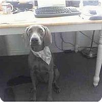 Adopt A Pet :: Cort  **ADOPTED** - Eustis, FL