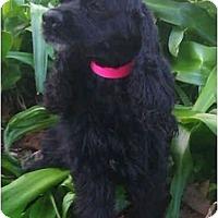 Adopt A Pet :: Rosie - Sugarland, TX