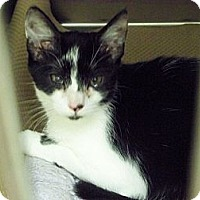 Adopt A Pet :: Oreo - Secaucus, NJ