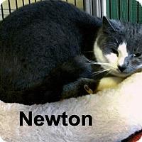 Adopt A Pet :: Newton - Medway, MA