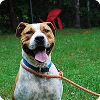 Adopt A Pet :: Rogue - Farmington, ME