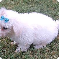 Adopt A Pet :: Alpine, Ashton, Astor - Fairview Heights, IL