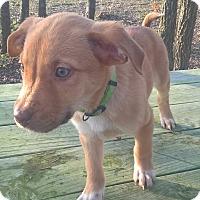 Adopt A Pet :: Abraham - Kyle, TX