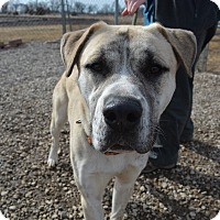 Adopt A Pet :: Leo - Grinnell, IA