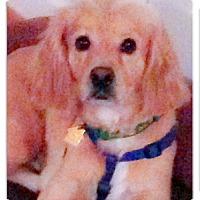 Adopt A Pet :: Gabe girls best buddy - Sacramento, CA