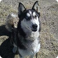 Adopt A Pet :: Tantor - Alamogordo, NM