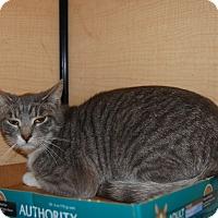 Adopt A Pet :: Hadrien - Whittier, CA